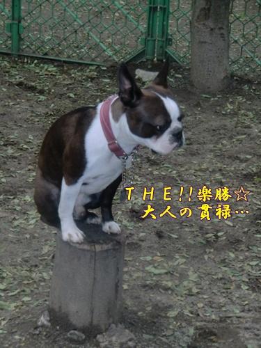 2011_0514_163555-CIMG5164.jpg