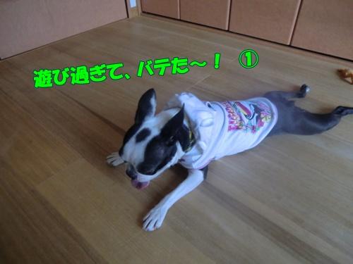 2011_0520_154335-CIMG5243.jpg