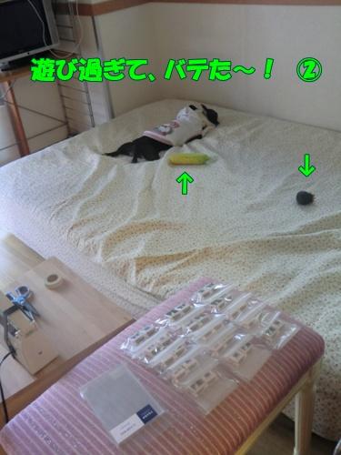 2011_0520_164909-CIMG5251.jpg