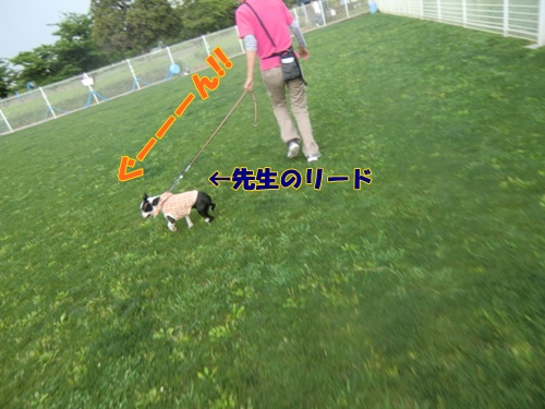 2011_0526_145809-CIMG5314.jpg