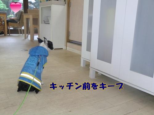 2011_0528_130258-CIMG5320.jpg