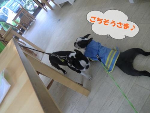 2011_0528_141346-CIMG5352.jpg