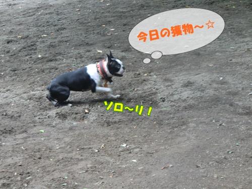2011_0610_120904-CIMG5464.jpg