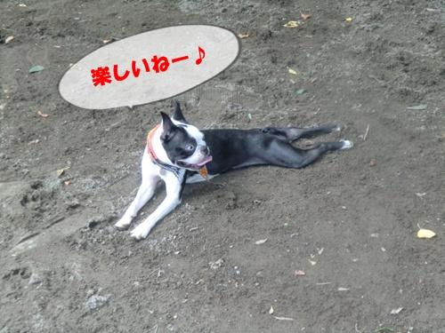 2011_0610_122209-CIMG5469.jpg