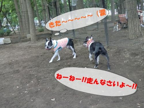 2011_0610_123326-CIMG5472.jpg
