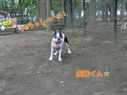2011_0610_123332-CIMG5473.jpg