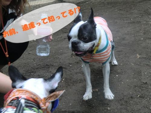 2011_0610_125744-CIMG5478.jpg