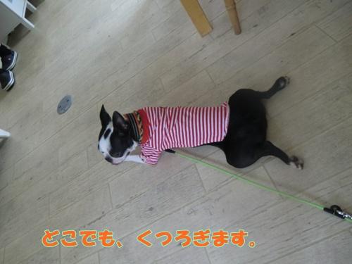 2011_0610_132200-CIMG5482.jpg