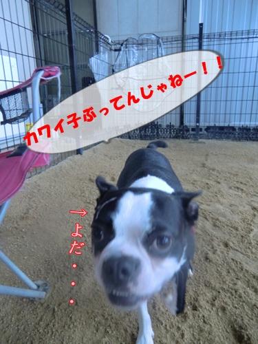 2011_0617_121644-CIMG5535.jpg
