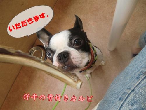 2011_0617_131030-CIMG5540.jpg
