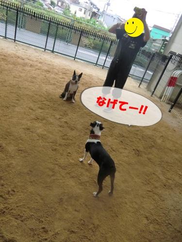 2011_0617_134951-CIMG5551.jpg
