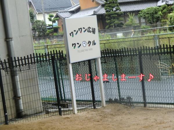 2011_0617_141304-CIMG5553.jpg
