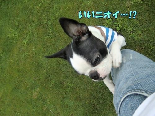 2011_0626_163413-CIMG5628.jpg