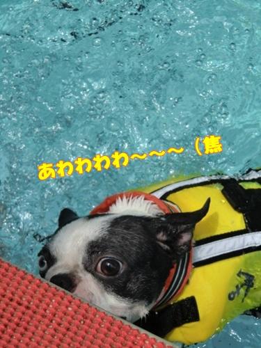 2011_0703_122450-CIMG5751.jpg