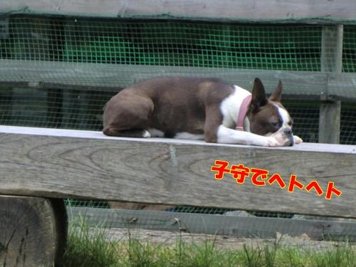 2011_0703_135054-CIMG5761.jpg