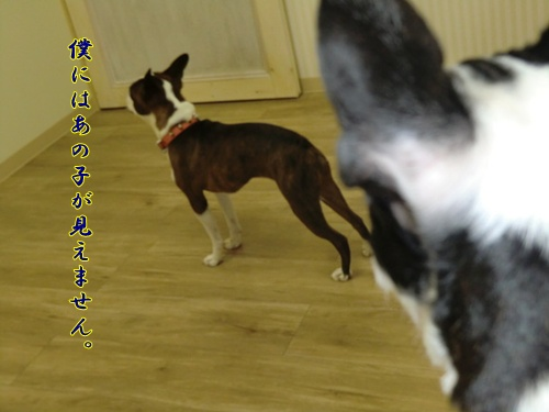 2011_0707_133016-CIMG5802.jpg
