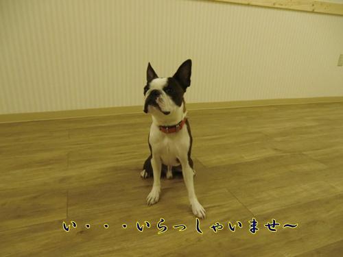 2011_0707_140638-CIMG5806.jpg