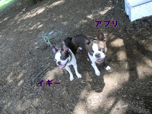 2011_0709_121202-CIMG5862.jpg