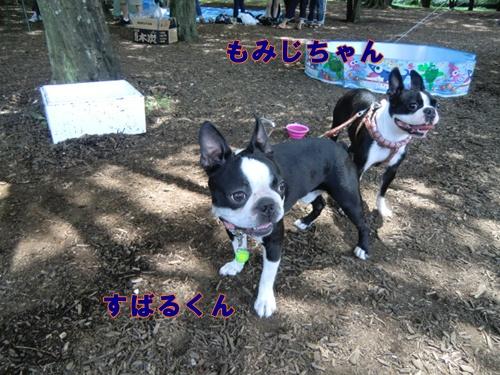 2011_0709_121209-CIMG5863.jpg