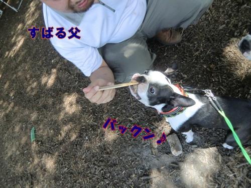 2011_0709_125007-CIMG5871.jpg