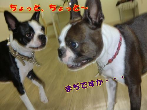 2011_0723_162440-CIMG5995.jpg