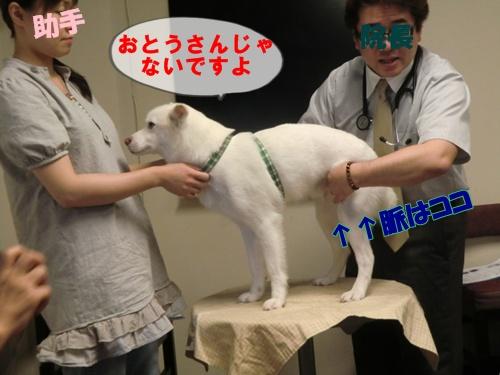2011_0727_143047-CIMG6025.jpg