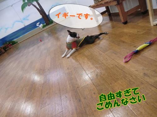 2011_0802_171510-CIMG6102.jpg
