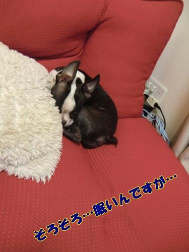 2011_0802_222659-CIMG6126.jpg