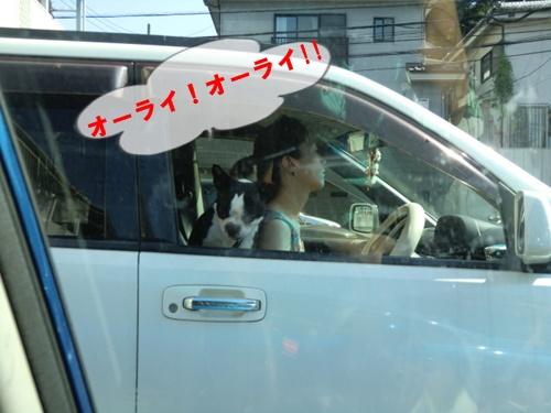 2011_0810_145541-CIMG6225.jpg