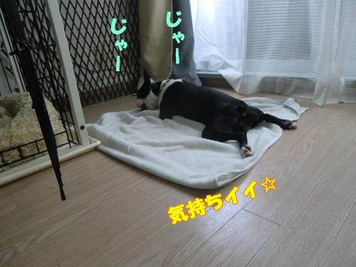 2011_0815_104253-CIMG6272.jpg