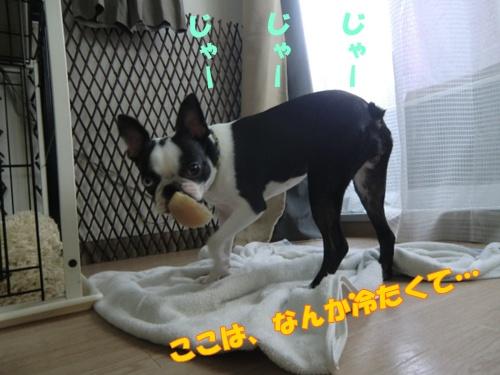 2011_0815_104302-CIMG6273.jpg
