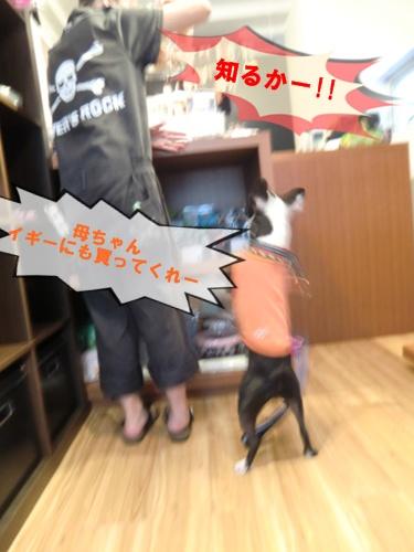 2011_0815_162039-CIMG6288.jpg