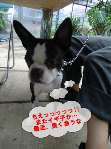2011_0819_133553-CIMG6341.jpg