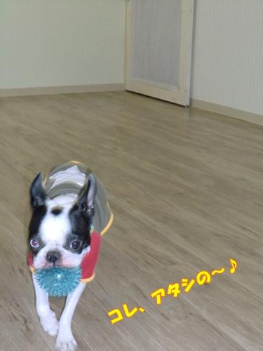 2011_0819_162612-CIMG6368.jpg