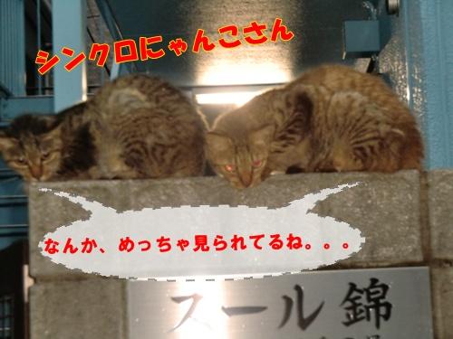 2011_0822_181335-CIMG6413.jpg