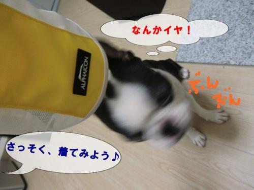 2011_0826_180639-CIMG6459.jpg