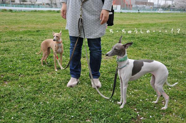 100411狂犬病予防接種 (4)