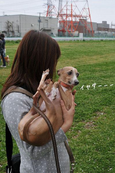 100411狂犬病予防接種 (5)