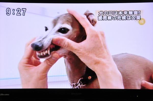 とくダネ!ジーク (6)