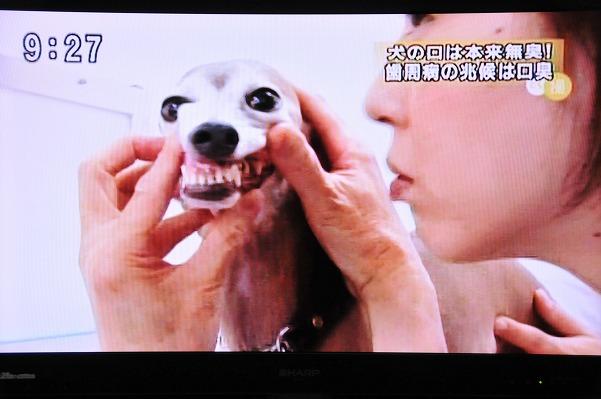とくダネ!ジーク (7)
