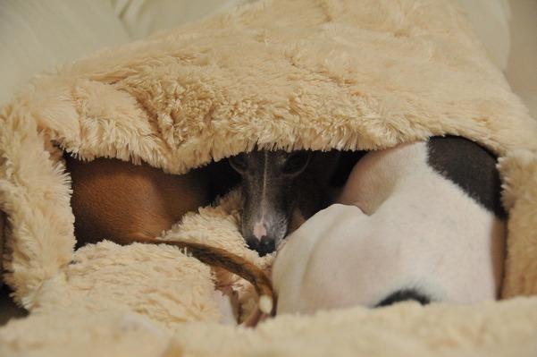 寝袋 (3)