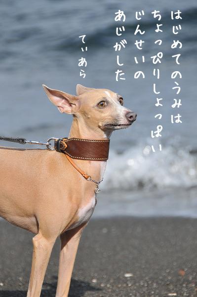 千葉南房総その3 (4)