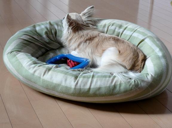 チワは部屋にいる時、ほとんどの時間をこのベッドで過ごしてます