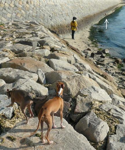 チワは石の上を歩くの拒否したので、抱っこ中。。