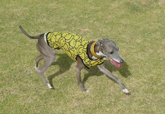 黄色と黒のコントラストが強すぎて、ピントが服に合っちゃうモンク君(^_^;)