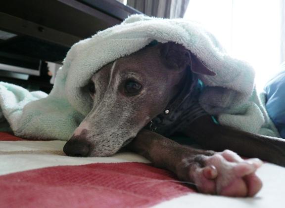 あまりの急な寒さに、ホットカーペットを付けました。。