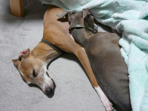 脚をのびのび伸ばして寝るな