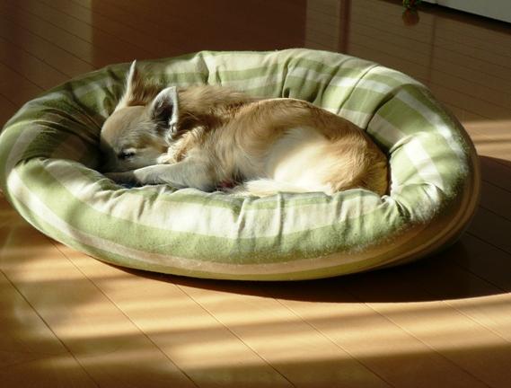 うちの犬はよく寝るなぁ・笑