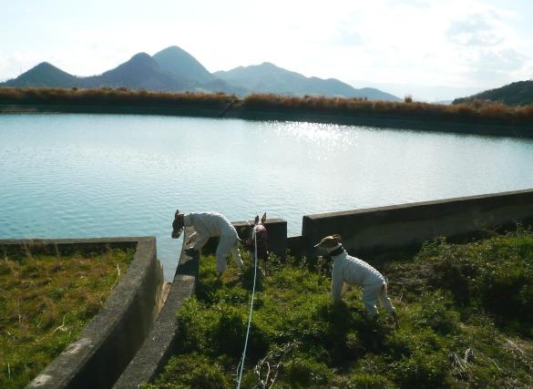 香川なので、歩いて15分圏内にため池が10個近くあります
