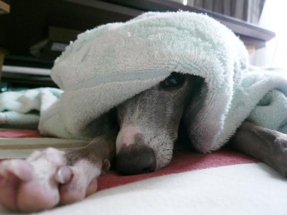 寒かった昨日は、服+毛布